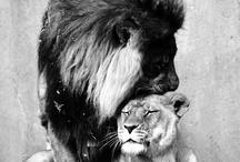 Lions  / by Gabriela Chavarria