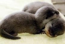 Manatees & Otters! / by Jenna Rose