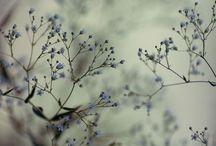 indigo / sweet indigo dreams.
