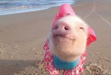 Smiling Animals / We love those grins from ear to ear!