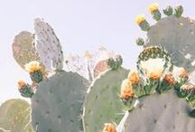 Party Style: Cacti / Succulent inspiration for a party inspired by the beautiful forms and colours of the cactus