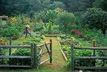 Gardening / by Shai Fosbery