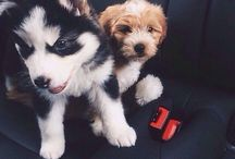 cute animals / animals. but mainly puppies!