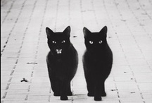 Black Cats / I love black cats and have had four in my life.  Something magical and majestic about black cats:)