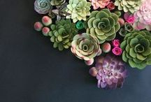 Succulent Glory / Who doesn't adore succulents? They are all the rage. Always.