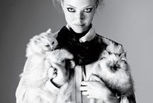 Crazy Cat Lady / - is it a compliment or a an insult? -
