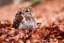 Beauty in fallen leaves