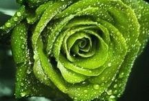 Color - It's Green! / Green Inspirations