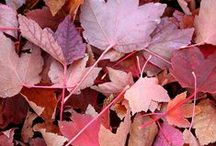Fall Colors / Mother Nature loves her rosés and reds, too.