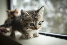 Sooooo cute / by Caroline Thomas