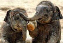 - Safari Animals -