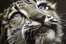 Wild Cats / All cats are, to a certain extent, wild and a law unto themselves.  This board is devoted to larger cats that are found in the wild and are generally ferocious yet beautiful.