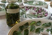 Natural Remedy / Herb gardens, growing herbs, herbs used in cooking, herbs for medicinal purposes, natural remedies, etc.