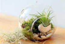 Terrariums and Tiny Gardens