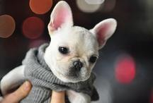Fur Babies !!! / by Pooky426 ...