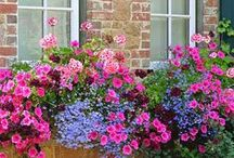 Off The Wall / Include plants into your wall decor or window boxes like this