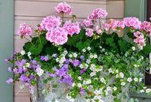 Containers, Containers, Containers / We love container gardening