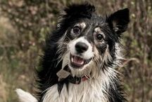 JCV Photo: Animals and Pets / Animal photography; pet photography; dog photography, cat photography;