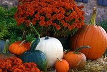 Fresh Fall. Haunting Halloween.  / All things autumn!