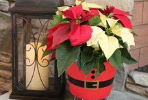 Christmas Joy / Only plants and flowers on our Christmas list this year
