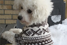 ❅ Dog sweaters to KNIT & Crochet.. Patterns ❅ / Here you can share knitted  sweaters patterns  for our beloved friends. Crocheted patterns are also welcome.