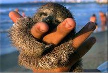 Stupendous Sloths