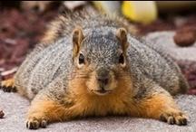 Losco (iattolo) / I love squirrel