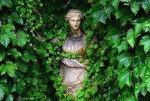 Into the Garden . . .