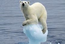 Ursus maritimus Phipps - Polar Bears! / I X Key - Opus 12: Ice  Classical music videos: First Ice Cube (Con moto) http://www.youtube.com/watch?v=vv6wHoNQpRk&feature=plcp Second Ice Cube (Convivio) http://www.youtube.com/watch?v=t5jOvRVeWUc&feature=plcp Third Ice Cube (Uncertain) http://www.youtube.com/watch?v=n007iGumngg&feature=plcp Fourth Ice Cube (Denouement) http://www.youtube.com/watch?v=hPKW2k-4jqo&feature=plcp Floe Bonus Movement Megamix (Ursus maritimus Phipps) http://www.youtube.com/watch?v=94niRJMGrSk&feature=plcp / by I X