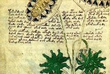 The Voynich Manuscript Mystery / The Voynich Manuscript is a mysterious book with a unique script that has yet to be translated or de-coded. Its fantastic botanical drawings have stumped researchers and historians for years. Of the 126 plant drawings about 124 have been named, even though the mysterious text cannot be understood. Written on animal skin, the pages date back to the 15th century. It was discovered in the Villa Mondragone near Rome in 1912 by antique book dealer, Wilfrid Voynich.