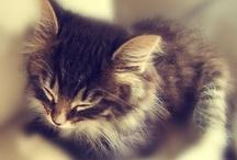 I Also Like Cats... / by Liz Rascher