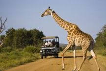 Extraordinary Africa / Africa is saturated with adventure. Explore Africa's wildlife galore and some of the world's most spectacular landscapes.