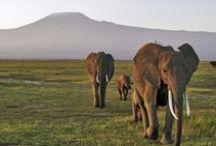 Kenya / by Rough Guides