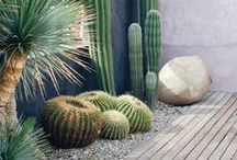DESIGN // Small Patio / Plant and decor ideas for our little outdoor space that will be drought-tolerant, easy to achieve, and relatively inexpensive.