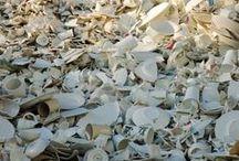SC | Afval - nieuwe grondstof