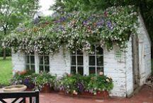 @ the garden