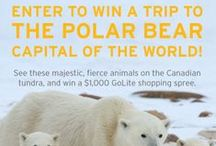 Passport to Polar Bears / This contest is now closed. Thanks for entering! / by GoLite