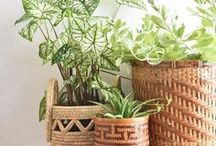 ※Green Fingers※ / Turning our home into a jungle one house plant at a time!