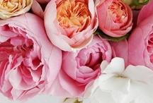 flora & fauna / peonies, pansies & poppies / by Charlotte Ingram