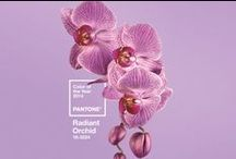 Colour : Radiant Orchid / Pantone Colour of the Year 2014: Radiant Orchid.