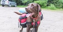 Hiking with dogs / hiking, backpacking, dogs, Canadian Rockies,