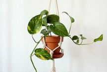 ROPE & ROOT macrame plant hangers / Macramé plant hangers from ROPE & ROOT by Annalea Hart