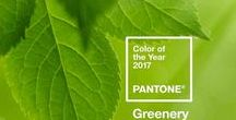 Colour: Greenery / Greenery, 2017 Pantone colour of the year