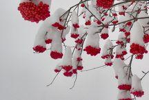 CHRISTMAS / by Amber Barnett-Hoover