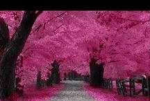 Love Pink! / I just love the color hot pink.   One of my favorite colors for year. Even named my business after the color.