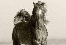 Horses / a NOBLE breed