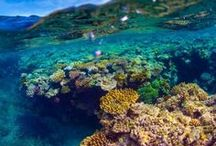 Great Barrier Reef Travel / All you need to know for traveling to the Great Barrier Reef in Australia including Great Barrier Reef Itineraries, Great Barrier Reef Travel Guides and Great Barrier Reef Travel Inspiration