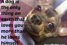 Dog Memes / Funny or touching dog memes.
