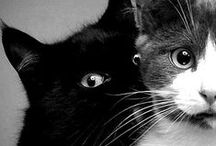 =^.^= ♥  Kitties ♥  =^.^= / Cats, Cats and more Cats :D