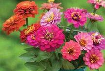 Houses - Garden Favorite Flowers